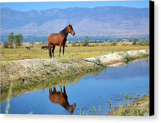 Mustang Canvas Print featuring the photograph A Mustang In The Mirror by Maria Jansson