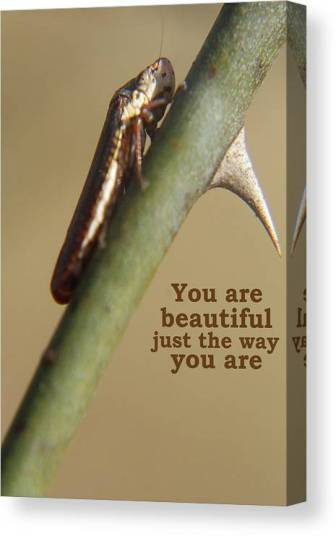 Nature Canvas Print featuring the photograph You Are Beautiful by Holly Morris
