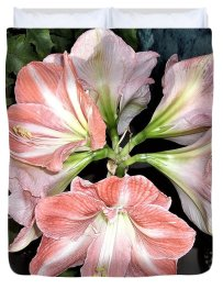 Amaryllis Duvet Cover featuring the photograph Amaryllis Burst by Nancy Ayanna Wyatt