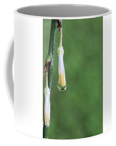 Nature Coffee Mug featuring the photograph On The End Of A Flower by Holly Morris