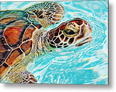 Swimming Turtle by Tatiana Travelways