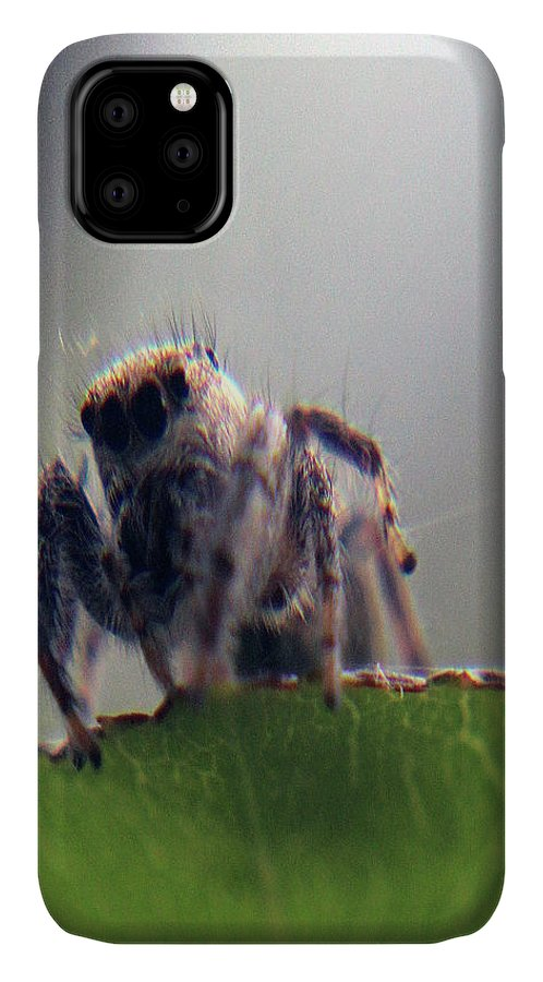 Nature IPhone Case featuring the photograph Angry Spider by Holly Morris