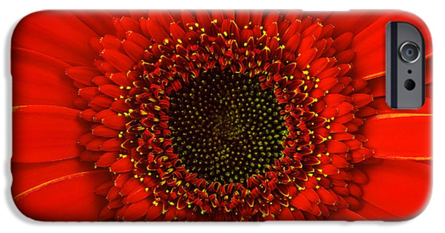 Red Gerbera Daisy, Close Up IPhone 6 Case for Sale by ...