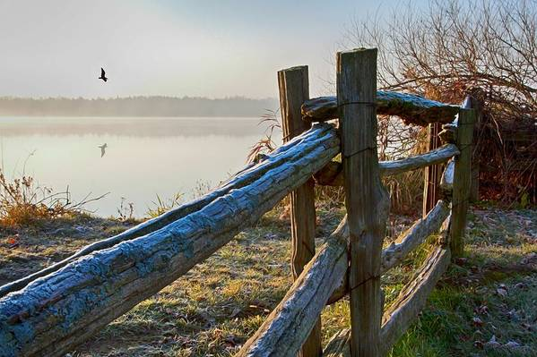 Frosted fence by the lake - art print by Tatiana Travelways