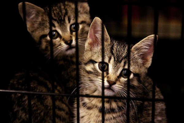 Kittens Art Print featuring the photograph Take Me Home by Tatiana Travelways