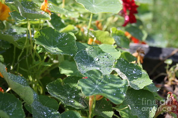 Water Beads After The Summer Rain by Tatiana Travelways
