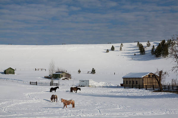 Winter Art Print featuring the photograph Winter Farm Washington by Tatiana Travelways
