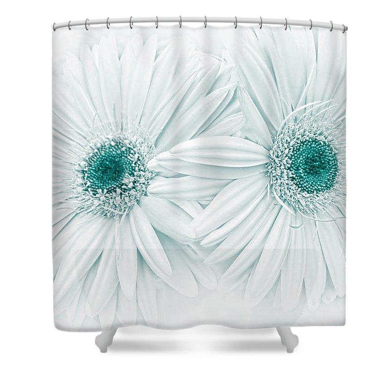 gerber daisy flowers in teal shower curtain