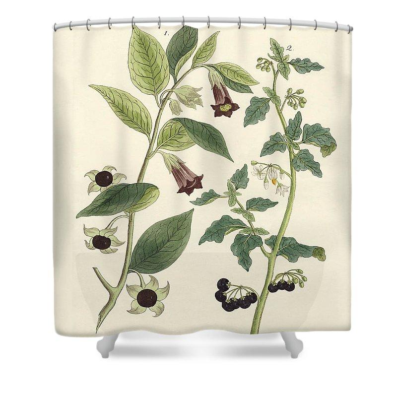 indigenous poisonous plants shower curtain
