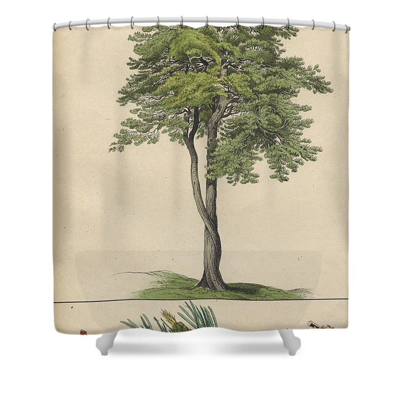 pine tree and pine cone shower curtain