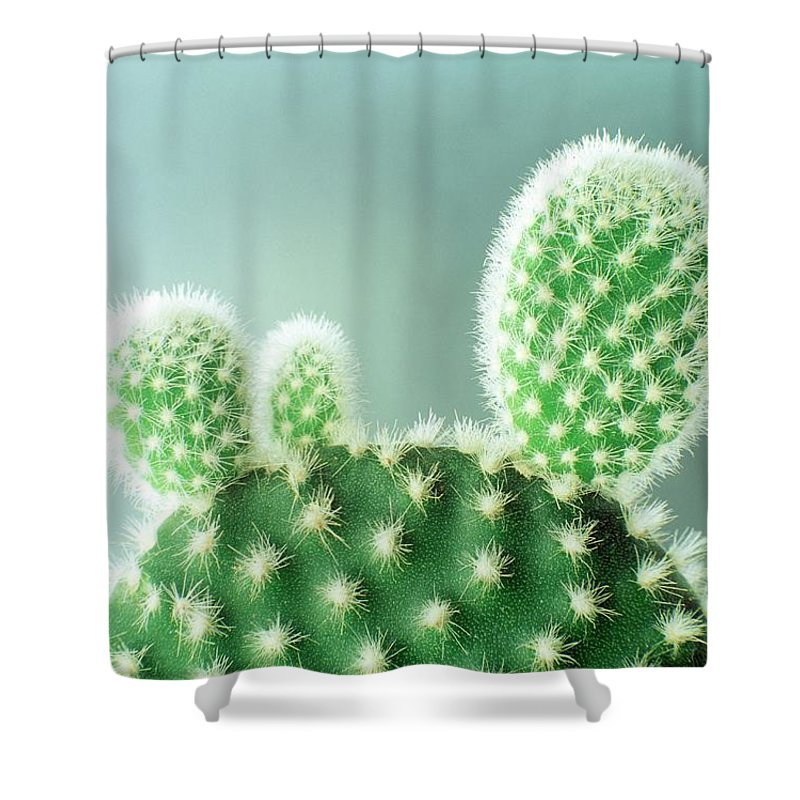 close up of a thorny cactus shower curtain