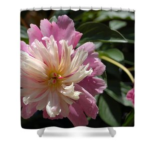 Dahlia Shower Curtain featuring the photograph Dahlia Delight by Nancy Ayanna Wyatt