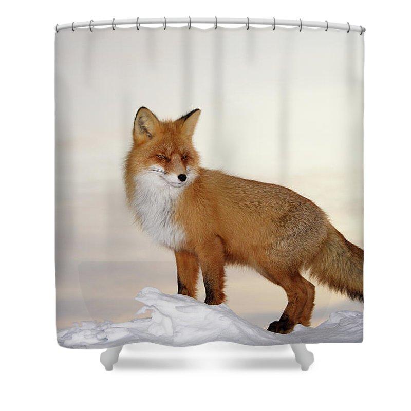 majestic fox shower curtain