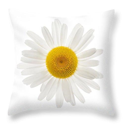 one daisy flower throw pillow