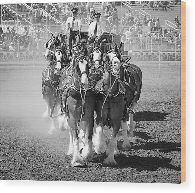 Budweiser Clydesdales Wood Print featuring the photograph Budweiser Clydesdales 2 by Maria Jansson