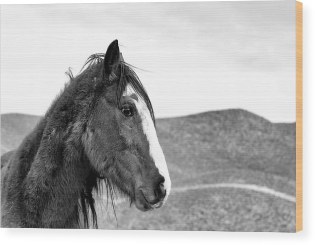 Senior Horse Wood Print featuring the photograph Wisdom Lingers - Black And White by Maria Jansson