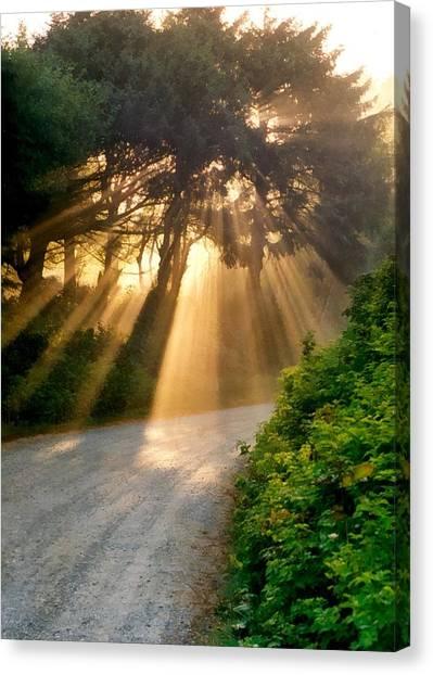 Sun Shining Through Trees Canvas Prints | Fine Art America