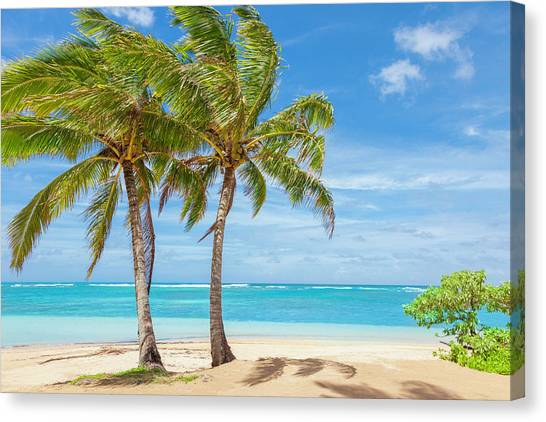 Palm Trees, Tropical Beach, Sand, Sky By Dszc