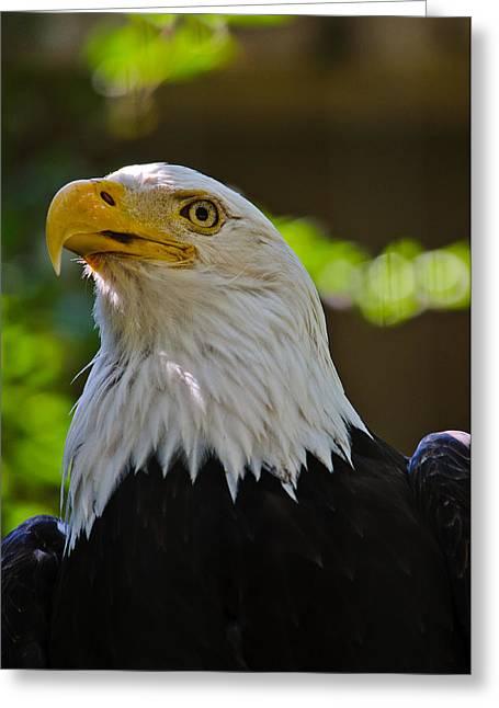 Alex Rios  C2 B  C2 B7 Bald Eagle Greeting Card