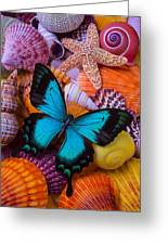 Blue Butterfly Among Sea Shells Photograph By Garry Gay