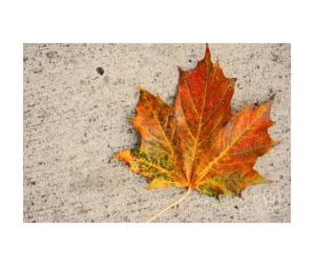 Fall By Shauna Obrien