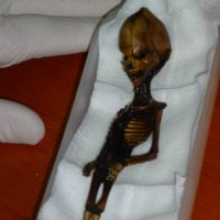 the Atacama Mystery; a six-inch, 6 - 8 year old Humanoid