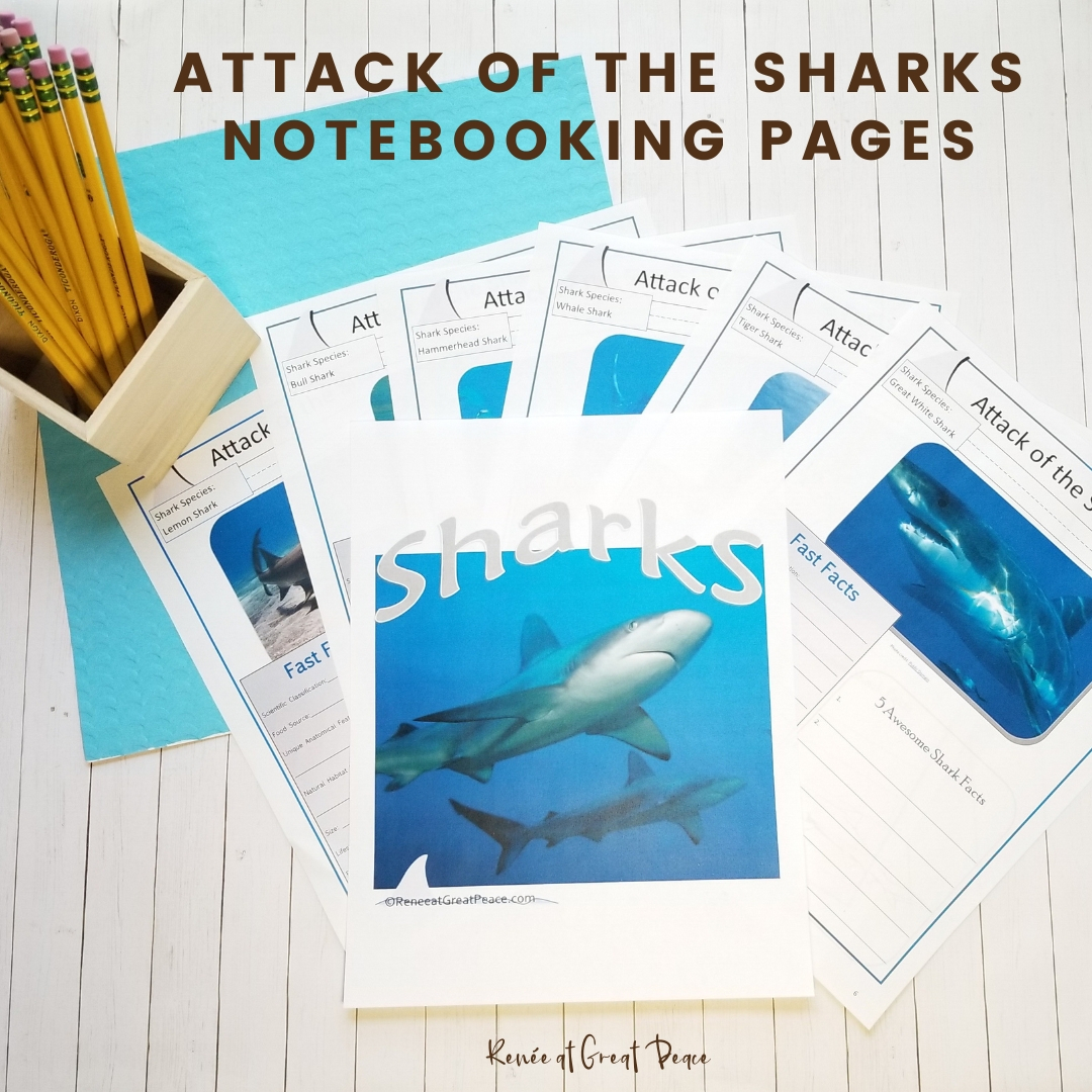 Sharks Unit Study For Homeschoolers