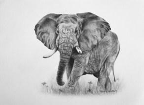 """Elephant, 2012 - 5""""x7"""""""