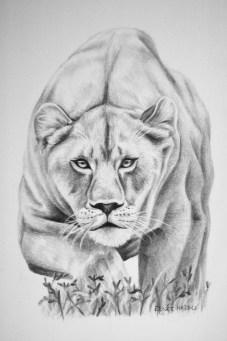 "Lioness, 2013 - 11""x14"""