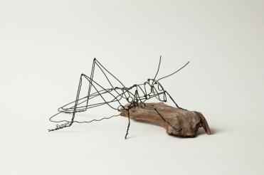 Grasshopper 2016
