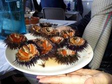 sea-urchins in restaurant Rodondo