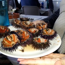 sea-urchins in restaurant Rodondo
