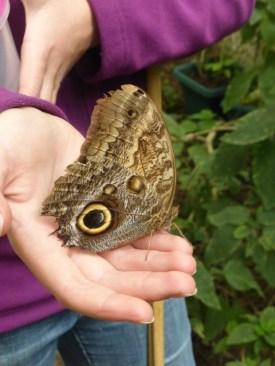 A magnificent moth
