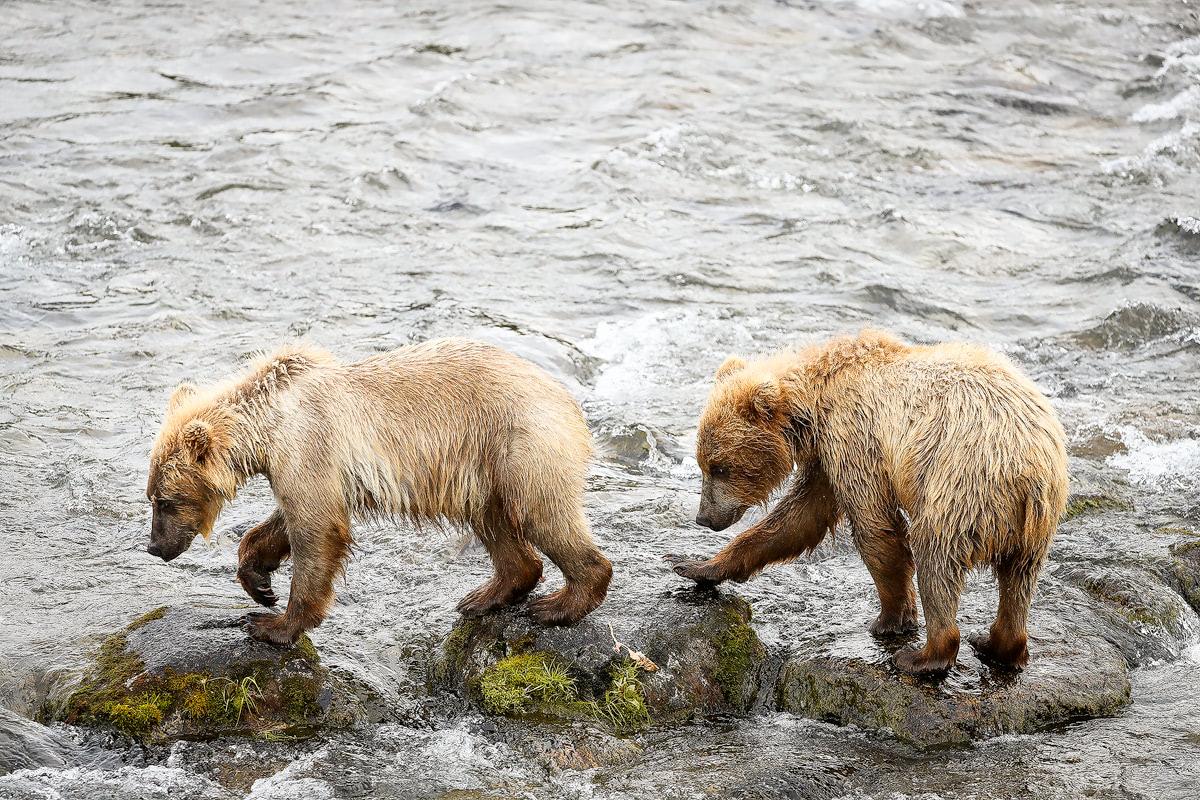 Exploring bear country - Katmai National Park