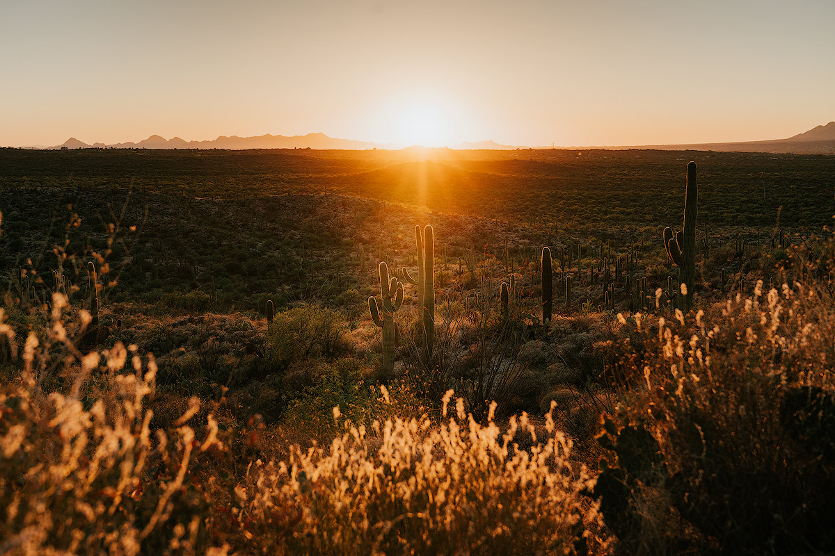 AMERICA'S NATIONAL PARKS – ALL 59 RANKED BEST TO WORST - SAGUARO NATIONAL PARK