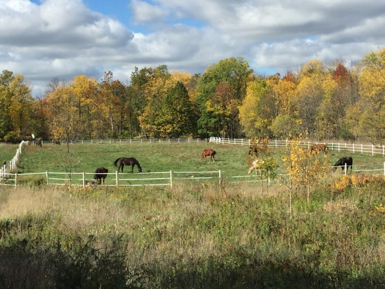 Horses turned out in the summer lower pasture