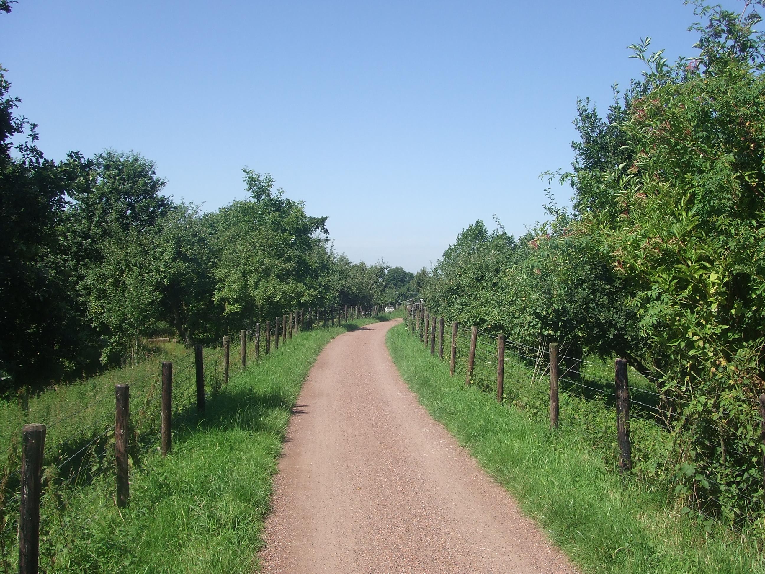 De Betuwe vandaag; Voetgangers/fietspad naar de Linge, tussen Deil en Enspijk (Foto: René Hoeflaak)