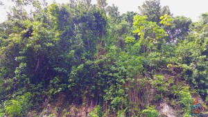 Harrisons Cave Barbados review Renes Points blog (2)