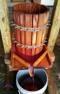 michigan-grapes-for-wine-renespoints-blog-puremichigan-joy-12