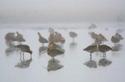 Grutto's in de mist