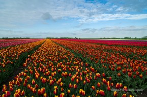 Lentelandschap in Flevoland