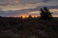 Zonsopkomst boven de Elspeetsche Heide