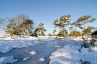 winters Kampina
