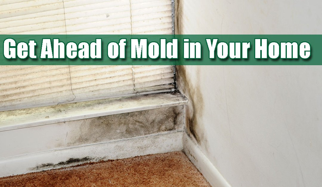 mold long island replacement windows