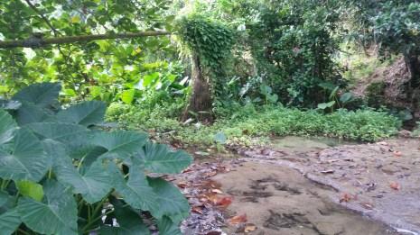 hike bush