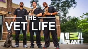 The Vet Life Season 3 on Animal Planet