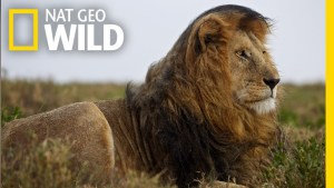 Nat Geo Wild new series animal er live