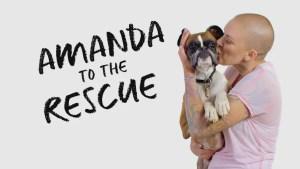 amanda to the rescue renewed for season 2