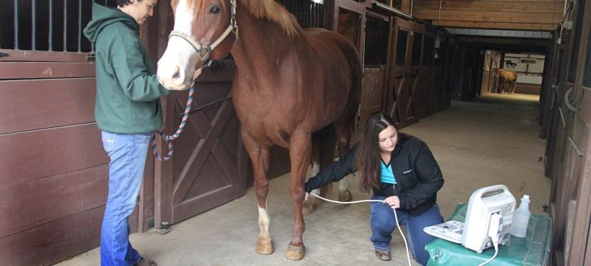 Equine Sports Medicine & Lameness