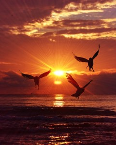 sunrise, birds, sky, water, embrace